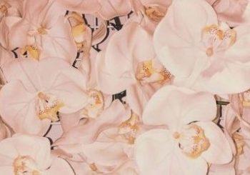 Kim Kardashian hints at new fragrance